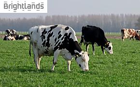 Grassa! - Graslanden als bron van hoogwaardig eiwit